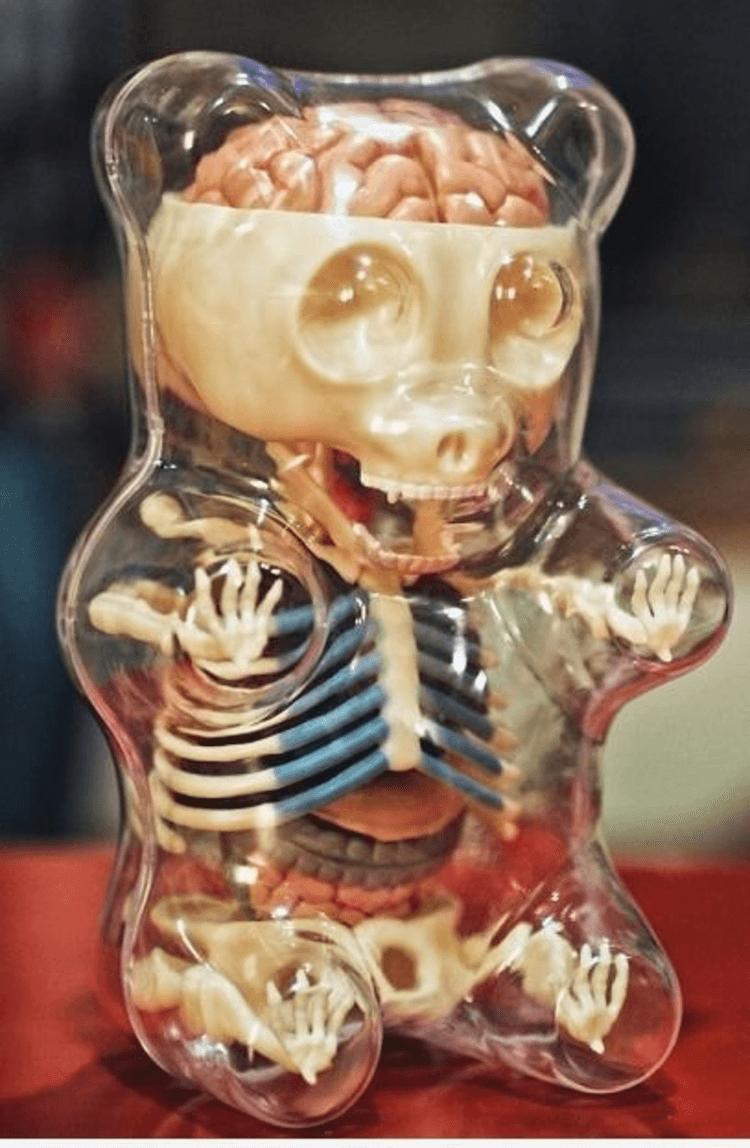 Anatomy of a gummy bear | Owned.com