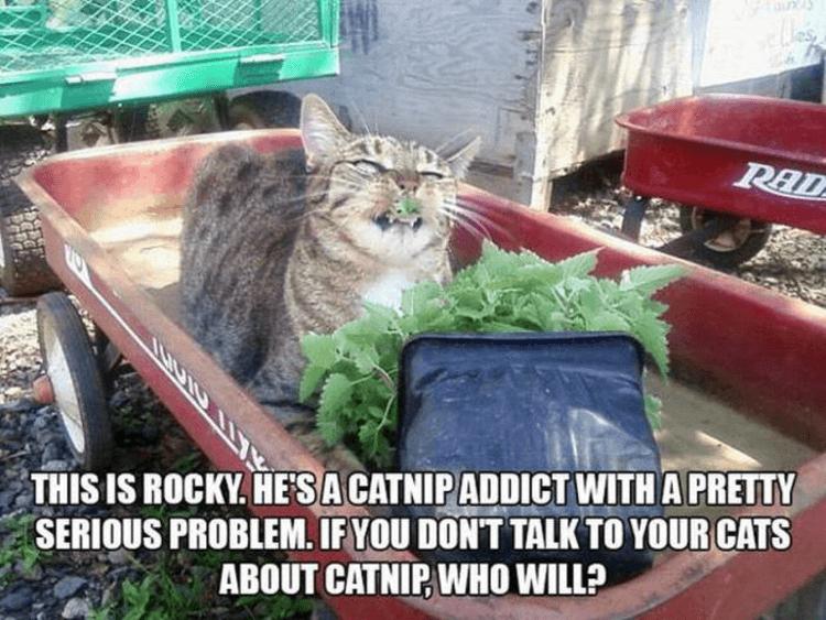 Top bewertete Videos von Tag: cat coxx