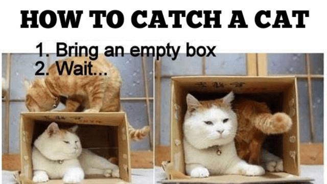 Epic Cat Pictures